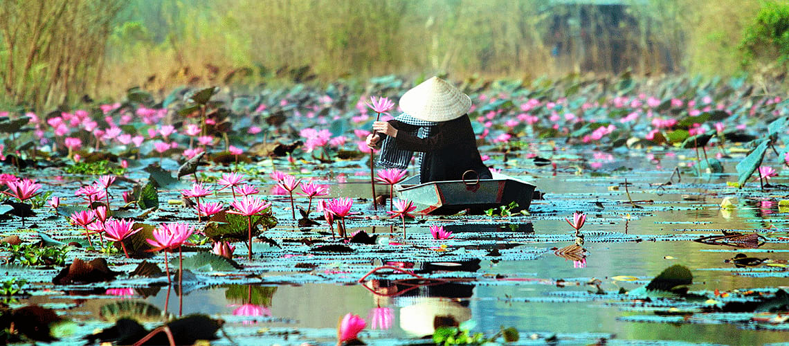 Pagoda in River with Lilies in Hanoi Vietnam
